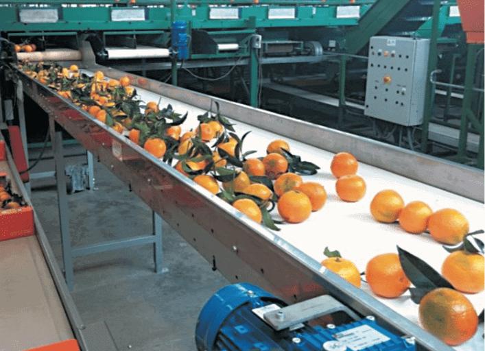 PVC Belt Conveyor Industri Sayur Dan Buah